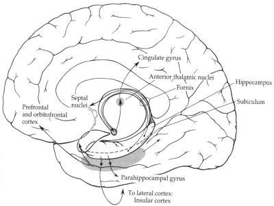 Anatomie De Lhippocampe
