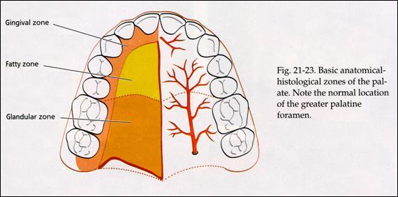 Epidémiologie 3 des et labio étiologies maxillo palatines fentes dwtwvr