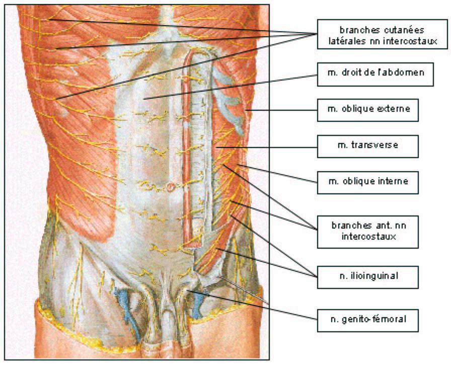 creux au niveau du thorax