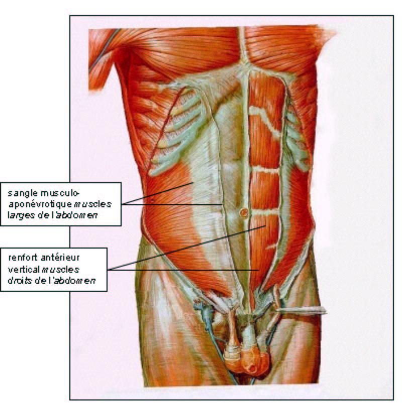 inflammation paroi abdominale