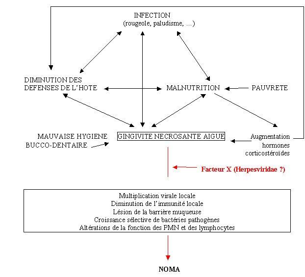 Schéma : ensemble des facteurs impliqués dans la pathogenèse du