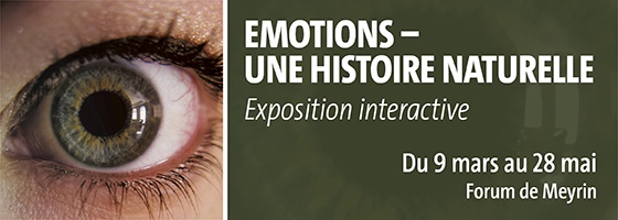 expo-emotions.jpg